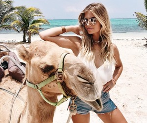 animals, camel, and travel image