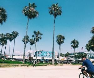 california, la, and palmtrees image