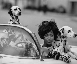 bw, dogs, and vintage image
