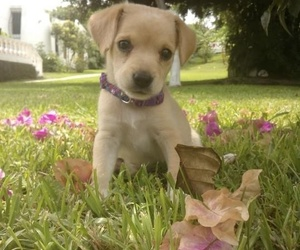 flowers, puppies, and doggos image