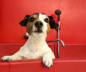 animal, bathroom, and beautiful image