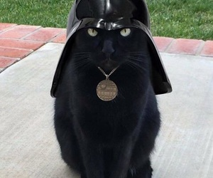 cat, star wars, and black image