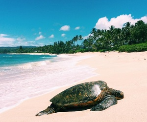 beach and turtle image
