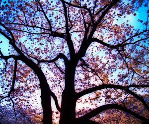colors, nature, and tree image