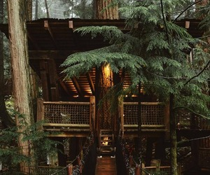 forest, nature, and tree house image