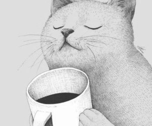 cat, coffee, and tea image