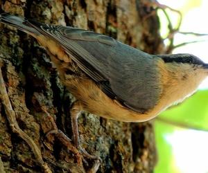 bird, nature, and wildlife image