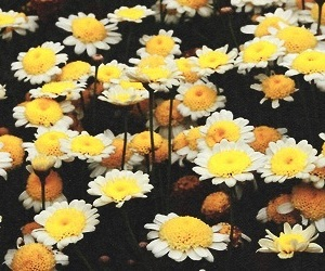 flowers, header, and yellow image