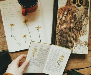 autumn, book, and owl image