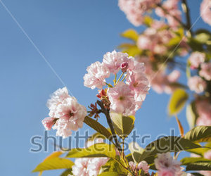 blue sky, floral, and inspiration image
