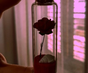 alternative, light, and rose image