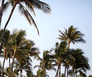 palm trees and hollisterco image