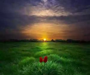 tulipanes and fondos image