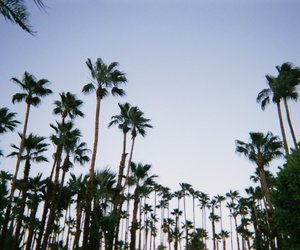 palms, tree, and palm trees image