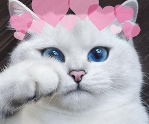 cat and hearts image