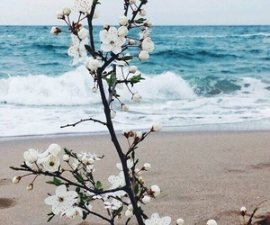 beach, freedom, and flowers image