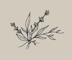 doodle, doodle art, and floral image