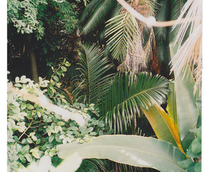 nature, green, and indie image