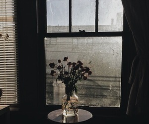 theme, light, and flowers image