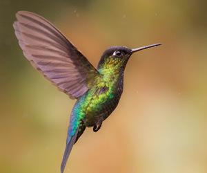 hummingbird and birdsm animals image