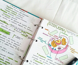 biology, study, and notes image