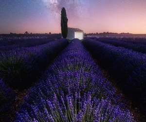 flowers, stars, and purple theme image