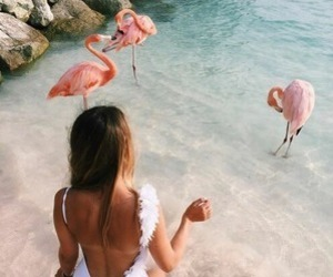 flamingo, girl, and nature image