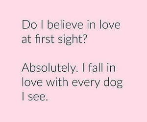 affection, dogs, and sight image