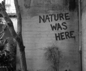nature, grunge, and quotes image