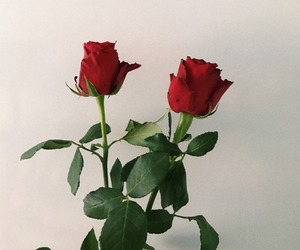 roses and aesthetic image