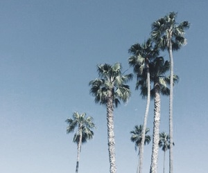 california, photography, and summer image