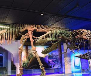 museo, museum, and dinosaurio image
