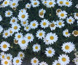 daisy, happy, and flowers image