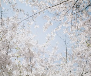 120 film, Film Photography, and 桜 image