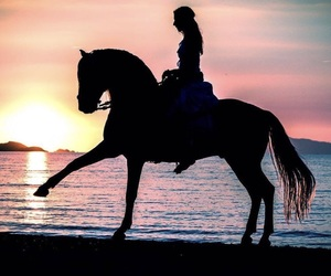horse, beach, and sunset image
