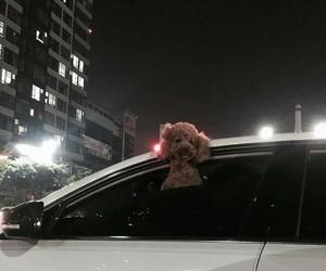 aesthetic, dog, and korea image