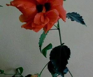 flower rose natutre image