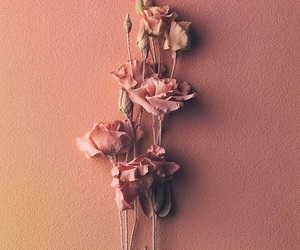 aesthetic, rose, and flowers image