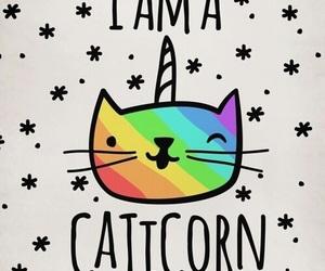 cat, caticorn, and rainbow image