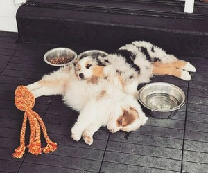 dogs, puppies, and sleeping image