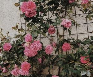 filter, rose, and flower image