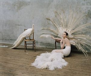 fashion, peacock, and white image