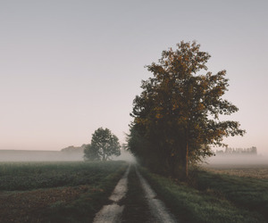 beautiful, foggy, and morning image