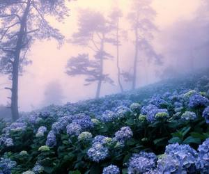 flowers, fog, and hydrangea image