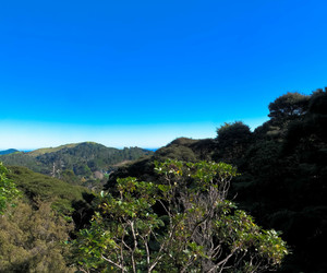 forest, view, and coromandel image