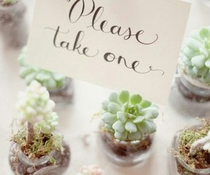 plants, wedding, and succulents image