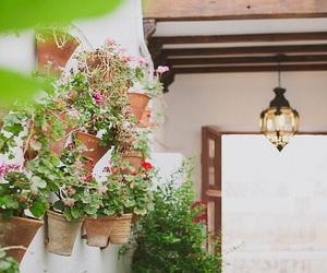 aesthetics, flowers, and lantern image