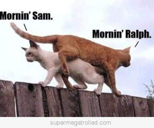 cat, funny, and morning image