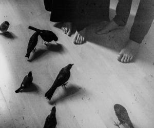 birds, laura makabresku, and love image