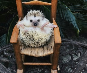 animal, hedgehog, and best friends image